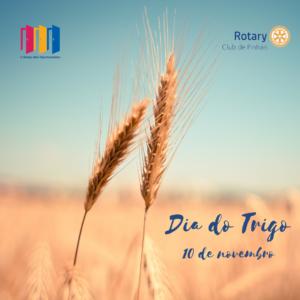 10 de novembro. dia do trigo
