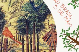 3 de maio. dia do pau brasil