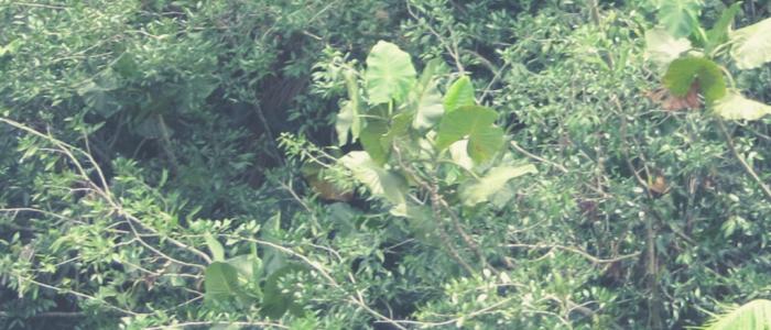 17 de julho. florestas